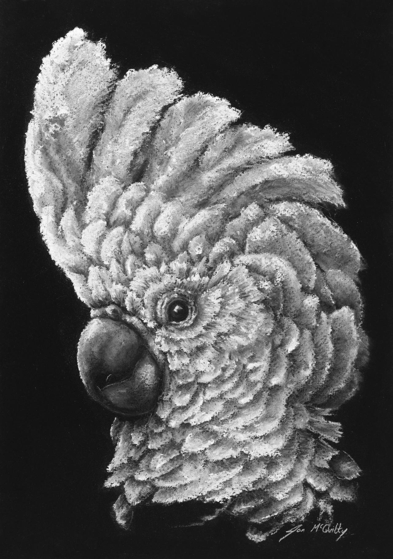 Strathbogie Pastel Artist – JanMcQuitty