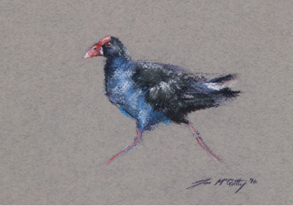 purple swamphen #01 (running)